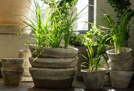 pot pour plante verte