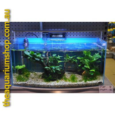 aquarium 50 litres