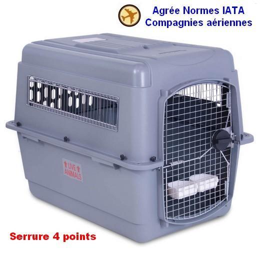 cage kennel chien