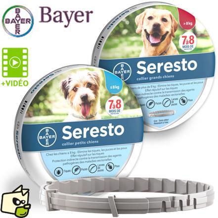 collier anti tique chien