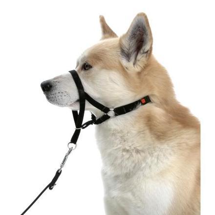 collier education chien