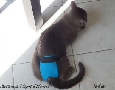 couche pour chat