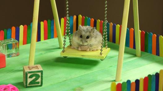 jeux hamster
