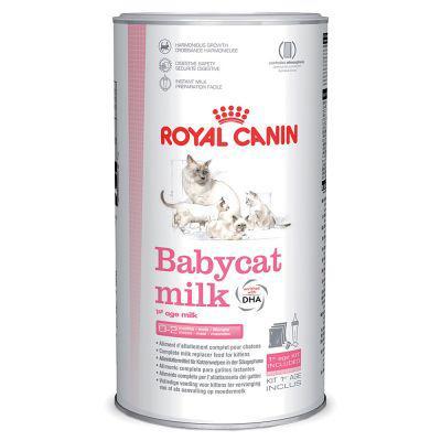 lait maternisé chaton
