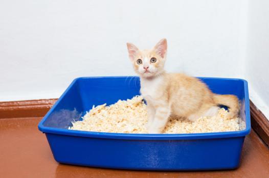 litiere pour chaton