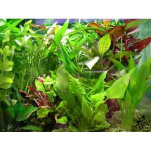 lot plante aquarium