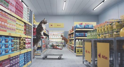 magasin de chat