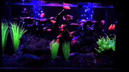 neon led aquarium