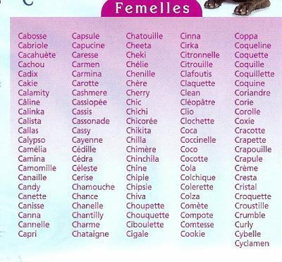 nom pour un chat