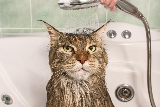 peut on laver un chat