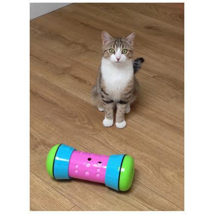 pipolino chat