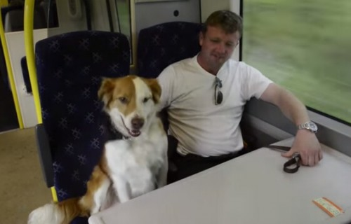 prendre le train avec un chien