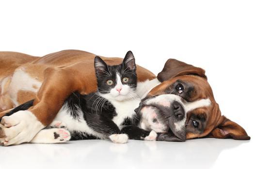 produit pour animaux