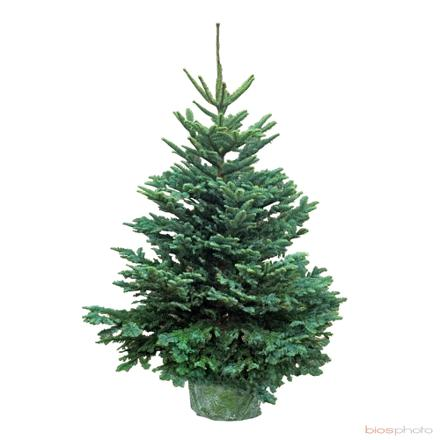 sapin de noel naturel