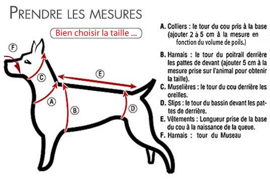 taille harnais chien