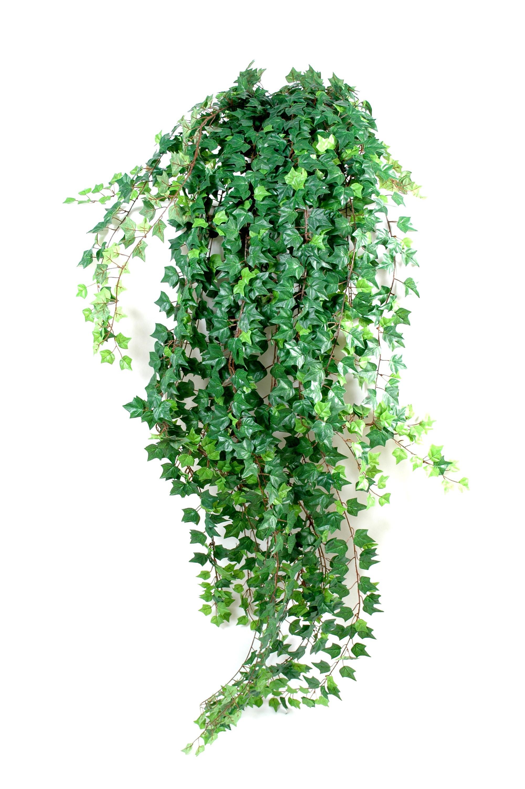 fausse plante tombante