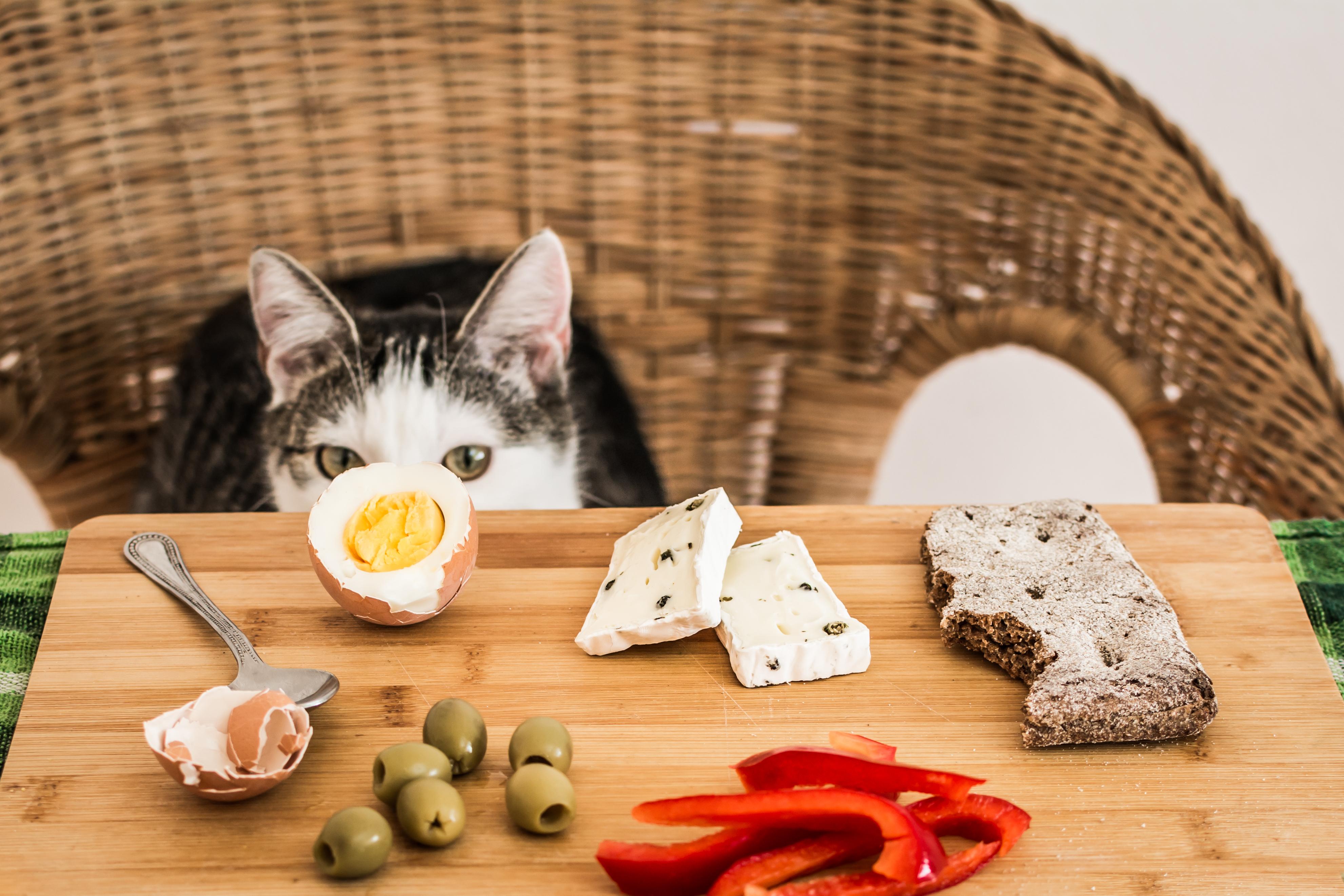 aliments dangereux pour les chats