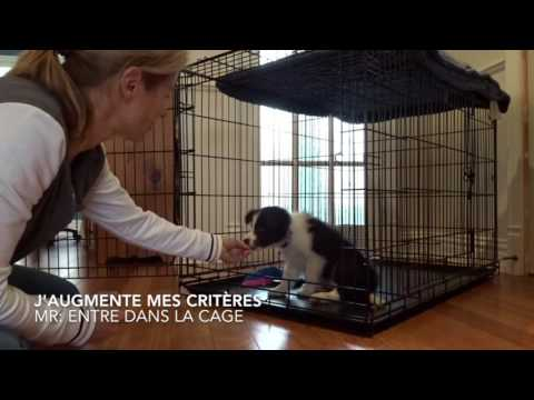 cage chiot