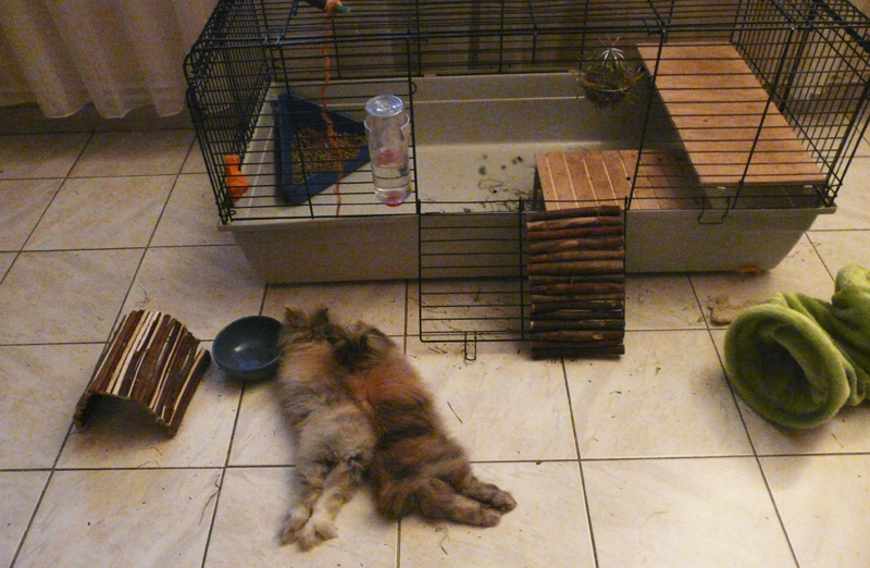 cage lapin belier