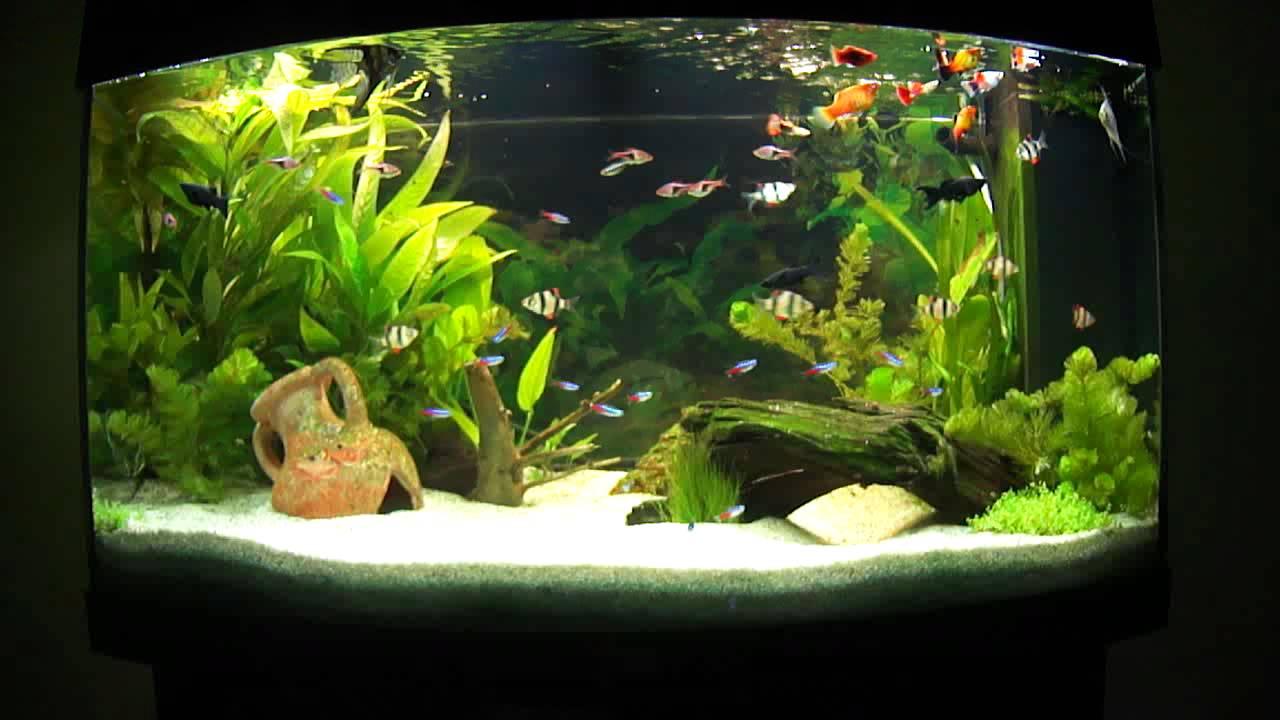 eau aquarium