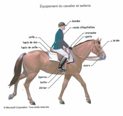 equipement pour cheval