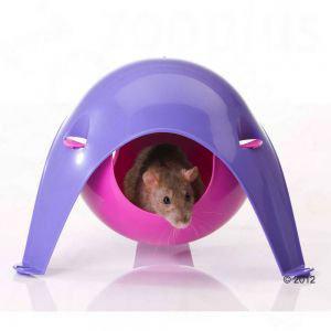 lit pour rat