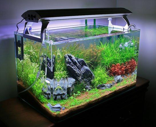 materiel aquariophilie