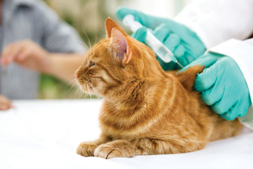 vaccin du chat
