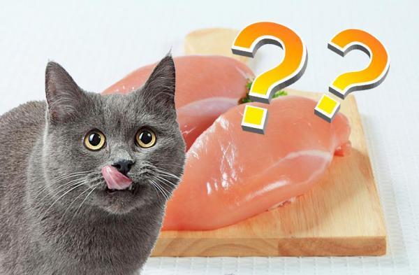 viande crue pour chat